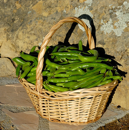 Basket of Favas
